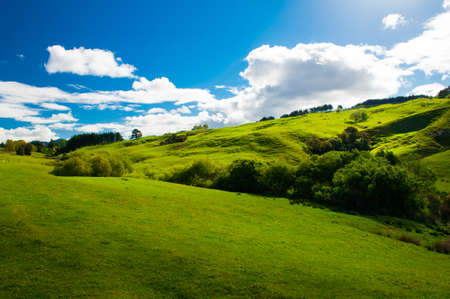 Beautiful green rolling hills of Southern New Zealand at dusk, Canterbury