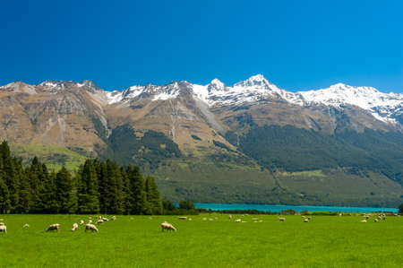 Beautiful landscape of the New Zealand - hills covered by green grass with herds of sheep with mighty mountains covered by snow and lake Wakatipu behind. Glenorchy, New Zealand Standard-Bild