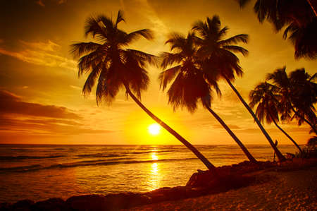 Beautiful sunset over the sea with a view at palms on the white beach on a Caribbean island of Barbados Standard-Bild