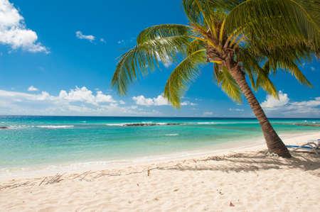 Palmen op het witte strand en een turquoise zee op een Caribische eiland Barbados Stockfoto