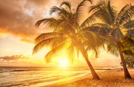 coco palm: Beautiful sunset over the sea with a view at palms on the white beach on a Caribbean island of Barbados Stock Photo