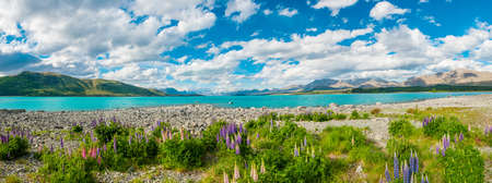Beautiful incredibly blue lake Tekapo with blooming lupins on the shore and mountains, Southern Alps, on the other side. New Zealand, panoramic photo photo