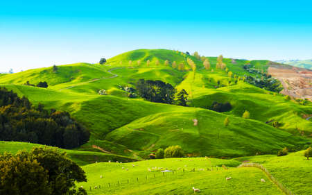 Beautiful green hills covered by grass and with many sheep on the pasture photo