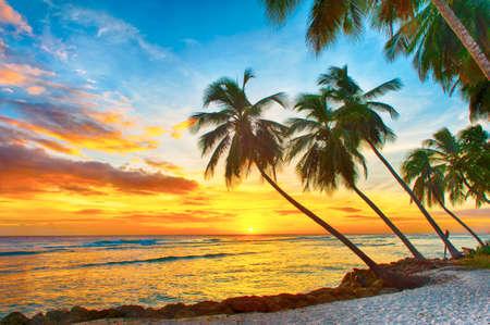 Prachtige zonsondergang over de zee met het oog op de handpalmen op het witte strand op een Caribische eiland Barbados