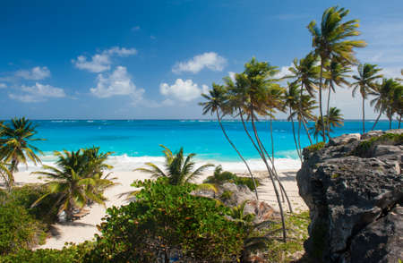 caribbean island: Bottom Bay is one of the most beautiful beaches on the Caribbean island of Barbados. It is a tropical paradise with palms hanging over turquoise sea
