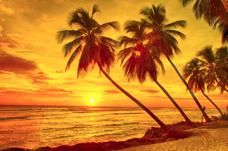 barbados: Beautiful sunset over the sea with a view at palms on the white beach on a Caribbean island of Barbados Stock Photo