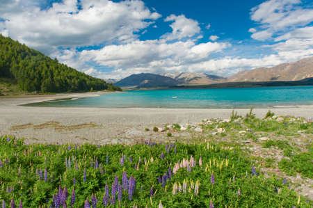 lupins: Beautiful incredibly blue lake Tekapo with blooming lupins on the shore and mountains, Southern Alps, on the other side. New Zealand Stock Photo