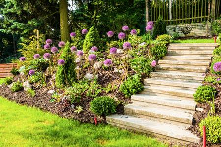 persia: Rock garden with beautiful blooming kind of decorative garlic Star of Persia (Allium christophii)