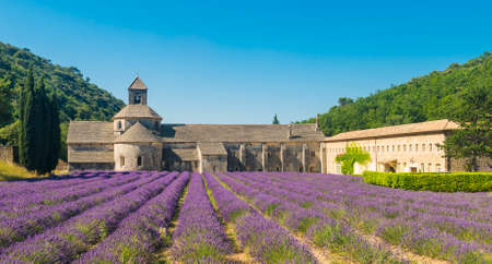 senanque: Cistercian Abbey of Senanque and blooming rows of lavender. Gordes, Vaucluse, Provence - France