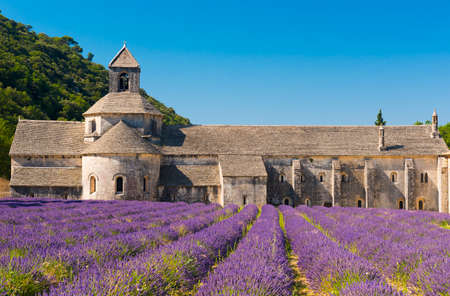 abbaye: Cistercian Abbey of Senanque and blooming rows of lavender. Gordes, Vaucluse, Provence - France
