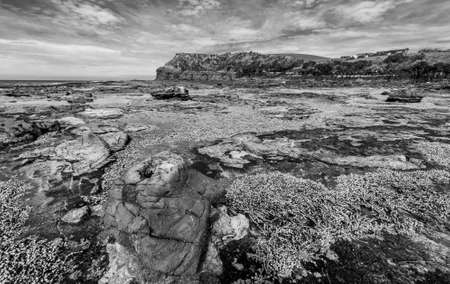 petrified fossil: Ancient petrified forest on the coast at Curio Bay, Otago - New Zealand Stock Photo