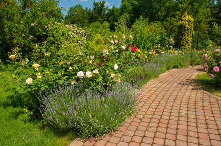 Beautiful garden with blooming roses, brick path Stock Photo