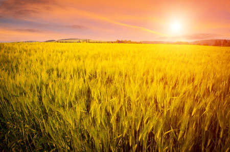 Beautiful landscape with green field and setting sun