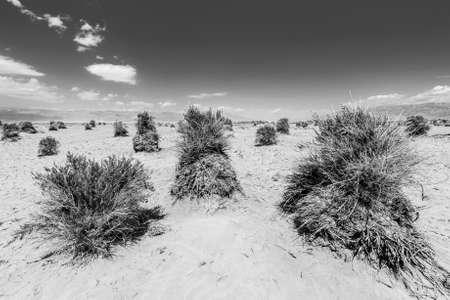 shrub: Sandy desert and shrub at Devils Cornfield, Death Valley National Park. California, USA Stock Photo