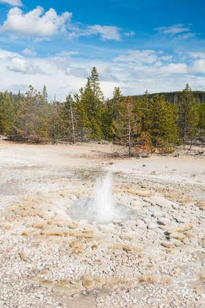 vixen: Vixen Geyser erupting. Norris Geyser Basin, Yellowstone National Park, USA