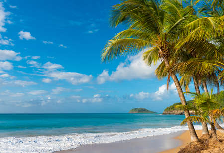 perle: Coconut palm trees on a Pearl beach near village of Deshaies, Guadeloupe, Caribbean