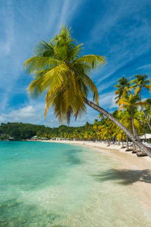 Kokospalmen op het Caravelle strand in Sainte Anne, Guadeloupe, Caribisch gebied
