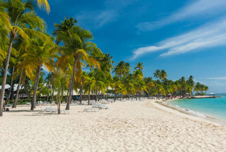 guadeloupe: Coconut palm trees on the Caravelle beach in Sainte Anne, Guadeloupe, Caribbean