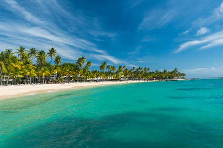 Des cocotiers sur la plage Caravelle à Sainte-Anne, Guadeloupe, Caraïbes Banque d'images