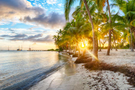 caribbean beach: Sunset over Anse Champagne beach in Saint Francois, Guadeloupe, Caribbean
