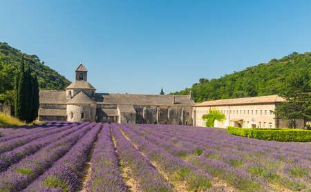 cistercian: Cistercian Abbey of Senanque and blooming rows of lavender. Gordes, Vaucluse, Provence - France