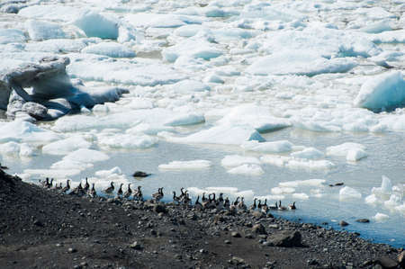 fjallsarlon: Beautiful photo of birds swimming in Fjallsarlon Glacial lake full of floating icebergs near the Fjallsjokull glacier Stock Photo