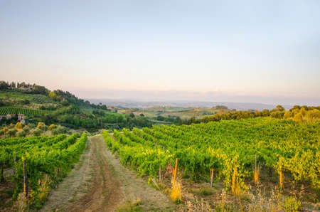 On of the many vineyards near San Gimignano in Tuscany, Italy. Morning picture