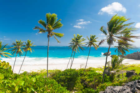 paradise bay: Bottom Bay is one of the most beautiful beaches on the Caribbean island of Barbados. It is a tropical paradise with palms hanging over turquoise sea