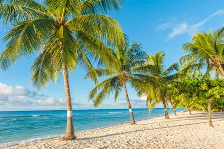 Palms on the white beach and a turquoise sea on a Caribbean island of Barbados