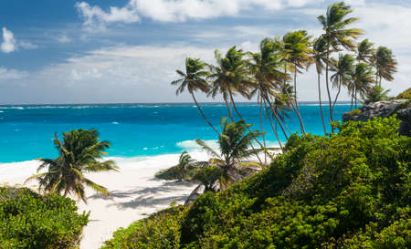 paradise bay: Bottom Bay is one of the most beautiful beaches on the Caribbean island of Barbados. It is a tropical paradise with palms hanging over turquoise sea. Panorama
