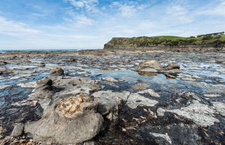 Ancient petrified forest on the coast at Curio Bay, Otago - New Zealand Stock Photo