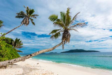 Beautiful palm tree over the beach Anse Banane, La Digue island, Seychelles.
