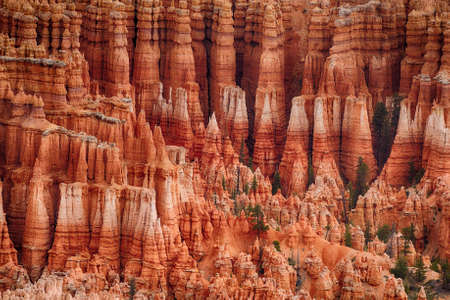 Detail of pink hoodoos in the late afternoon, Bryce Canyon National Park, Utah, USA Stock Photo