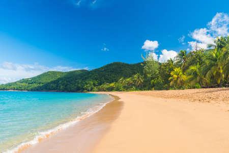 Deshaies 村、グアドループ、カリブ海に近いグランド アンスの素晴らしいビーチ 写真素材