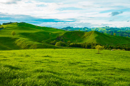 Beautiful green hills covered by grass and with many sheep on the pasture