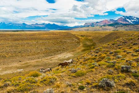 Three wild horses in pampas (plains) of Argentinian Patagonia near El Chalten town