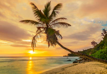 Beautiful sunset over the sea with a view at a single palm on the white beach in the Seychelles, island of La Digue.