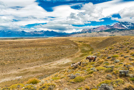 Three horses galloping in pampas (plains) of Argentinian Patagonia near El Chalten town