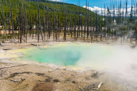 Deatiled photo of thermal pool and dead trees behind it. Yellowstone National Park, Wyoming, USA