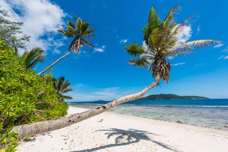 Beautiful palm tree over the beach Anse Banane, La Digue island, Seychelles. Standard-Bild