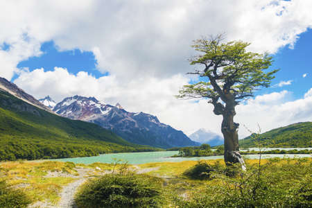 Tree at Laguna Nieta glacial lake in Los Glaciares National park in Argentina 免版税图像