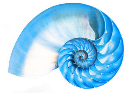 Detailed blue halved shell of a chambered nautilus (Nautilus pompilius) shows beautiful spiral pattern. Isolated on white Stock Photo