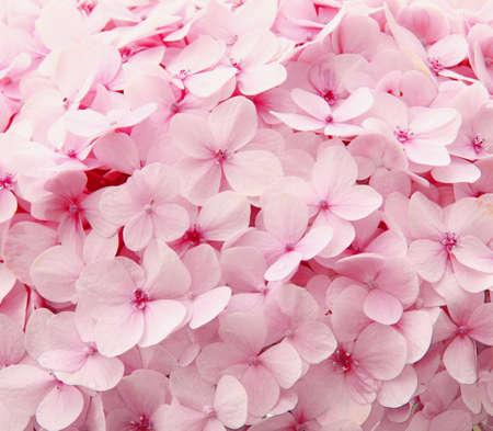 Pink flowers in the garden