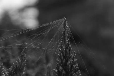 spiderweb: spiderweb Stock Photo