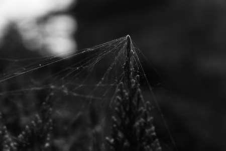 spiderweb: spiderweb with plant