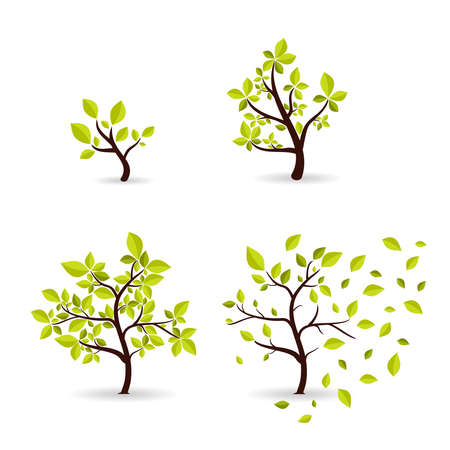 Vector botany concept cyclic growth of the tree. Environmental template development of wood from small to large, from spring to autumn. Eco style symbols set.