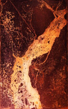 singular: Singular stone pattern: the old tree grow new leaves and branches of the image