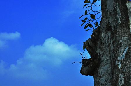 prestar atencion: Ilusión nudo árbol baiyun; La boca Foto de archivo