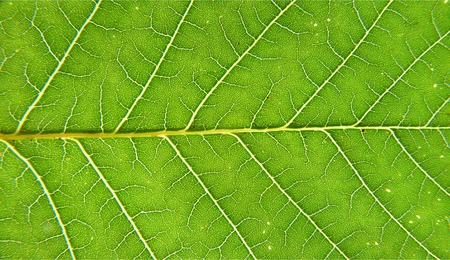 fine lines: Green leaves of plants fine lines Stock Photo