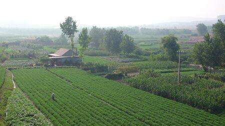 contradictory: Farmland landscape